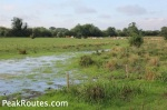 Derwent Valley Heritage Way - Waterlogged field near Derwent Mouth