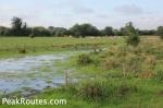 Derwent Valley Heritage Way - Waterlogged field near Derwent Mouth
