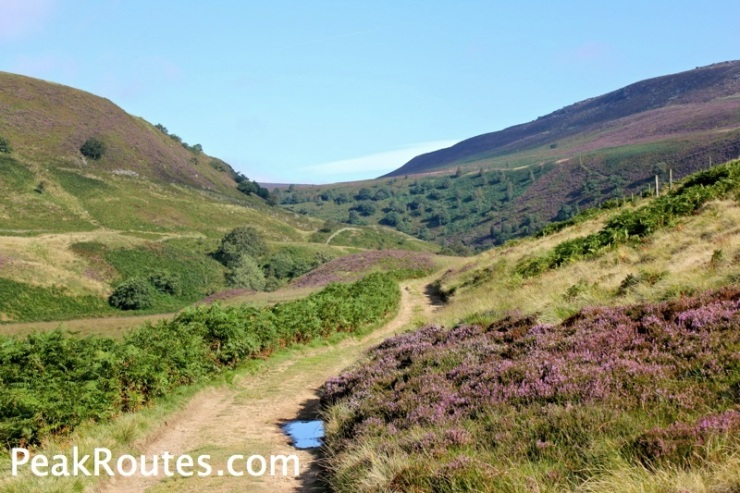 Upper Derwent Valley - Summer Heather