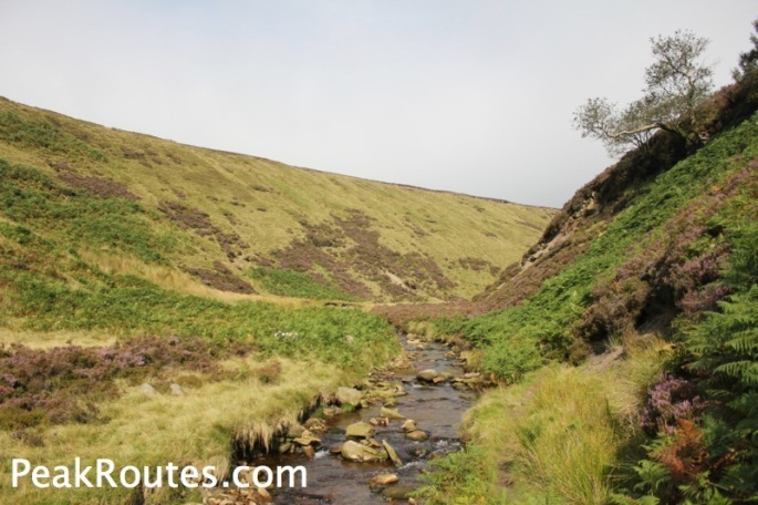 Upper Derwent Valley - Humber Knolls