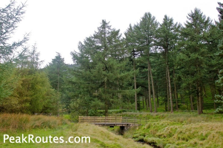 Westend Forest