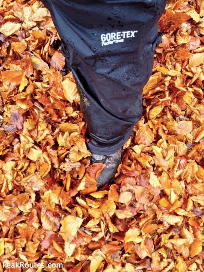 Autumn Leaves at Chatsworth