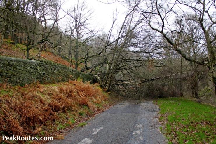 Fallen Tree across the path to Kinder Reservoir