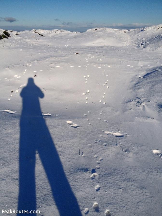 Bleaklow - Mountain Hare Tracks