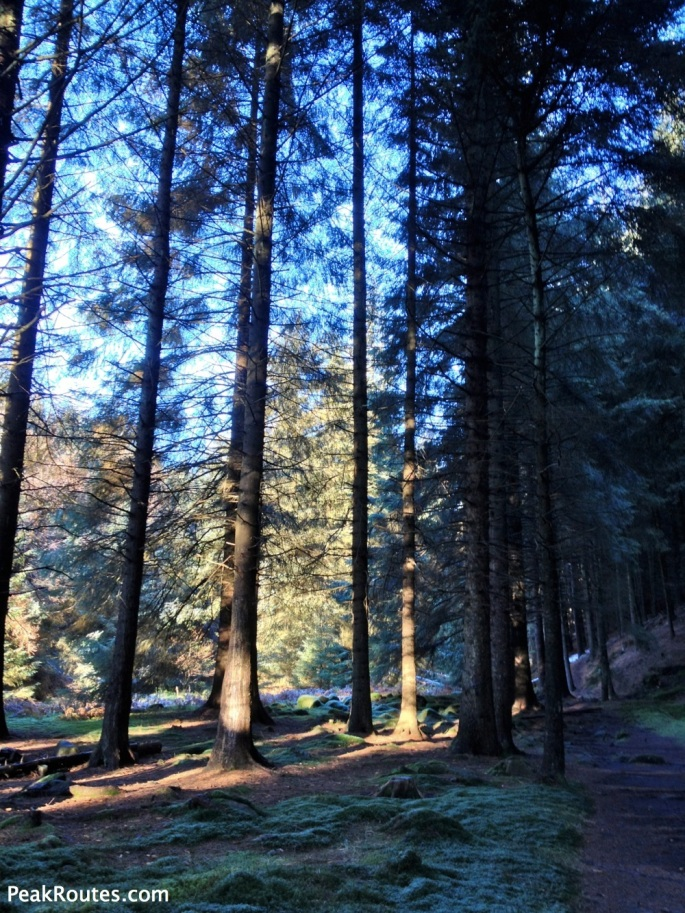 Lady Clough Forest