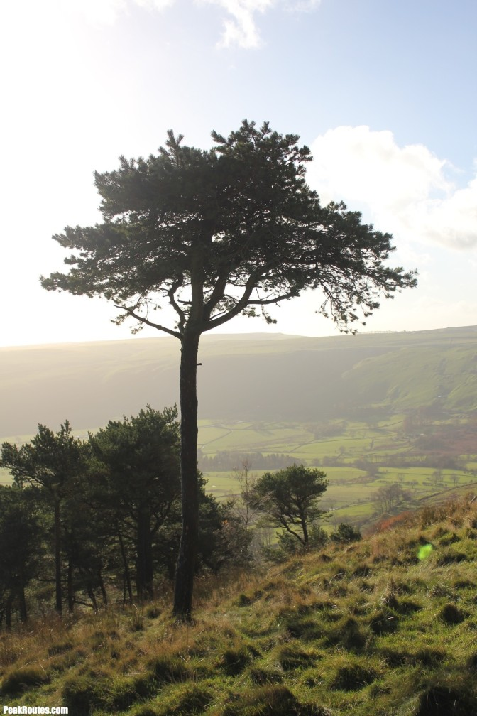 "The ""Lonely Tree"" on Back Tor"