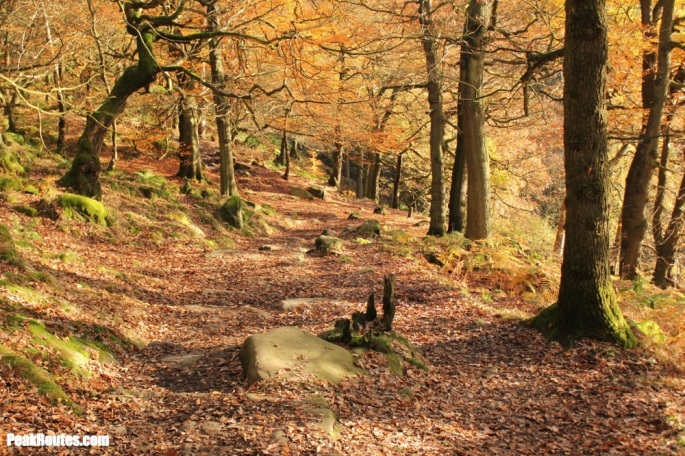 Padley Gorge - Autumn Colours