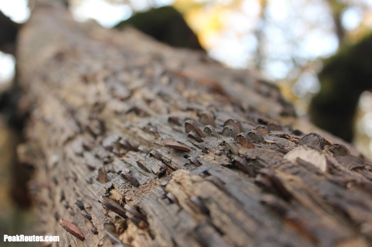 Padley Gorge - Money Tree