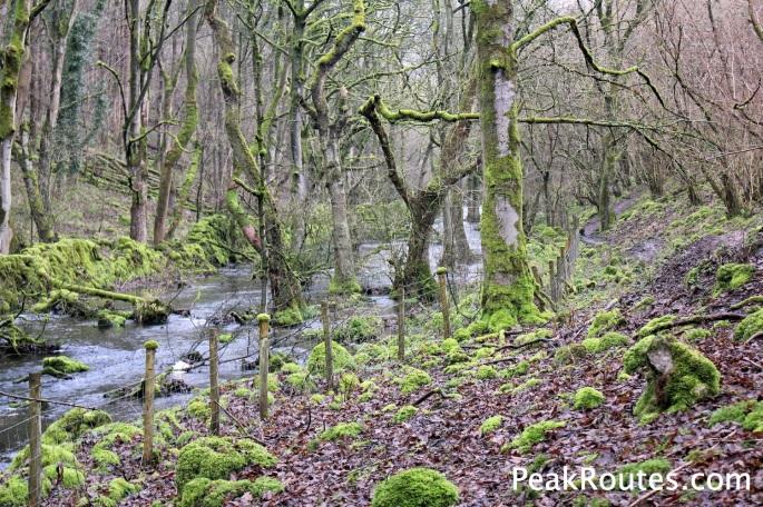 Cressbrook Dale National Nature Reserve