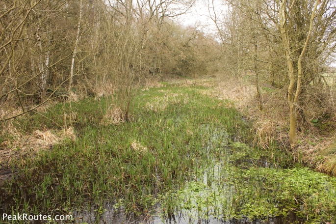 The canal is now a wildlife haven near Jacksdale and the Erewash Meadows Nature Reserve