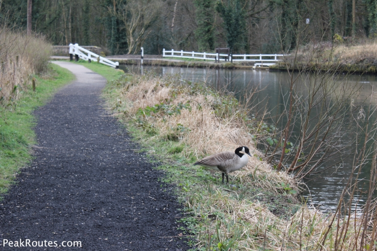 There is lots of Wildlife to be seen as you journey along the Canal