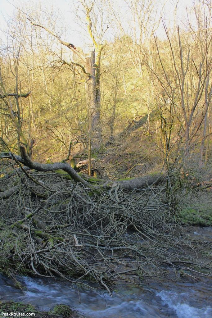A fallen tree in Bradford Dale