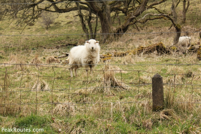 A Resident of the Manifold Valley
