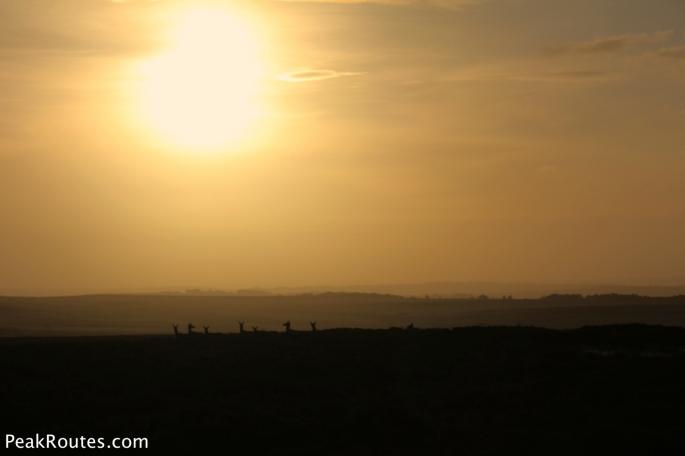 Herd of Deer on Big Moor